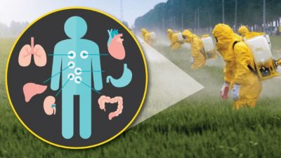 how to reverse the effects of roundup