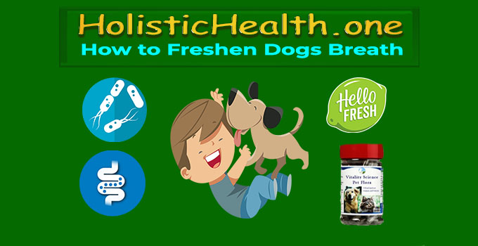 how to freshen your dogs breath